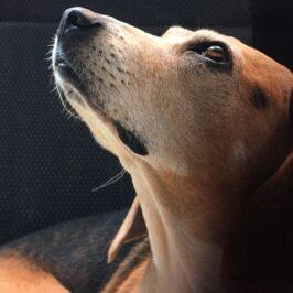 Come un cane ti può allungare la vita